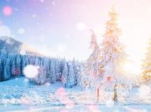 Montagnes majestueuses de paysage mystérieux d'hiver en hiver La neige magique d'hiver a couvert l'arbre Carte de voeux de photo  image libre de droits