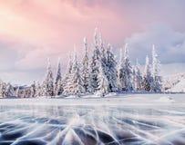 Montagnes majestueuses de paysage mystérieux d'hiver en hiver La neige magique d'hiver a couvert l'arbre Carte de voeux de photo  photos libres de droits