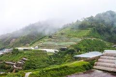 Montagnes Malaisie de Cameron Image libre de droits