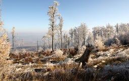 Montagnes polonaises - Sudety photos libres de droits