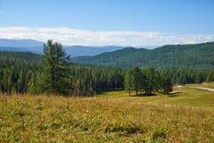 Montagnes prairie d'Altai et paysage de forêt Photographie stock libre de droits