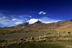 Montagnes, prairie et moutons couverts par neige Photo libre de droits