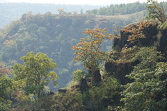Montagnes renversantes avec de beaux arbres Photo stock
