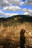 Montagnes slovaques ÄŽumbier Photographie stock