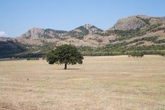 Montagnes solitaires de Macin d'arbre Photos libres de droits