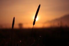 Montagnes tubulaires de la Bavière de kochelsee de marécage de lever de soleil Photographie stock libre de droits
