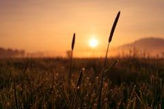 Montagnes tubulaires de la Bavière de kochelsee de marécage de lever de soleil Photos stock