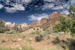 Montagnes, usines et roches Zion National Park images libres de droits