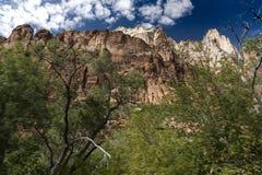 Montagnes, usines et roches Zion National Park images stock