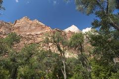 Montagnes, usines et roches Zion National Park photo libre de droits