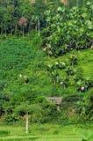 Montagnes vertes avec des arbres de plam dans la province de Lai Chau, Vietnam Photographie stock libre de droits
