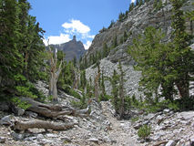 Montain Range in the Great Basin National Park, Nevada Stock Images