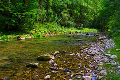 Montain River Royalty Free Stock Image