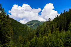 Montainous view in the Carpathian Royalty Free Stock Images