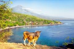 Montaje Agung en la isla de Bali, Indonesia Foto de archivo libre de regalías