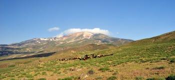 El monte Ararat Fotografía de archivo libre de regalías