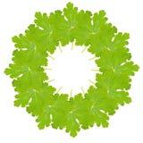 Montaje circular de la hoja Foto de archivo libre de regalías