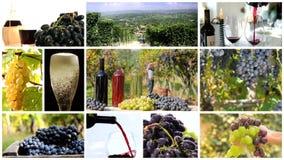 Montaje de la cosecha de la uva metrajes