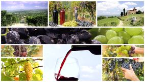 Montaje de la cosecha de la uva