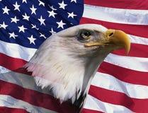Montaje de la foto: Águila calva americana y bandera americana Imagen de archivo libre de regalías