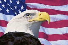Montaje de la foto: Bandera americana y águila calva Fotografía de archivo