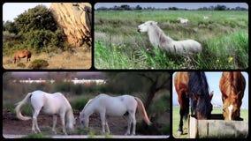 Montaje de los caballos almacen de metraje de vídeo