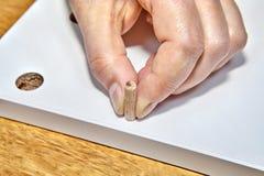 Montaje de los muebles, uso de los pernos de pasador de la madera dura durante woodworkin foto de archivo