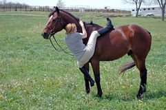 Montaje de un caballo foto de archivo libre de regalías