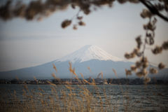 montaje Fuji con Sakura Foreground en el lago Kawakuchiko foto de archivo