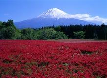 Montaje Fuji CVIII Imagen de archivo