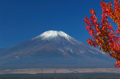 Montaje Fuji en falll Imágenes de archivo libres de regalías