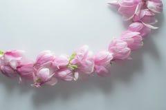 Montaje hermoso y puro de la magnolia imagen de archivo