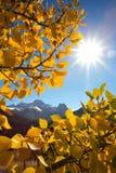 Montaje Lougheed en el otoño Fotografía de archivo
