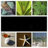 Montajes de la naturaleza Fotografía de archivo libre de regalías
