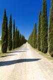 Montalcino royaltyfri bild