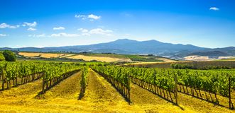 Montalcino countryside, vineyard, cypress trees and green fields. Tuscany, Italy Europe royalty free stock photography