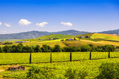Montalcino countryside, vineyard, cypress trees and green fields. Tuscany, Italy Europe royalty free stock photo