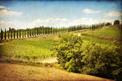 Montalcino Royalty Free Stock Photo