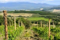 Montalcino (Toscanië, Italië) Royalty-vrije Stock Foto