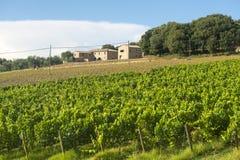 Montalcino (Toscanië, Italië) Stock Afbeeldingen
