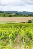 Montalcino (Tuscany, Italien) Arkivfoton
