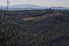 MONTALCINO - TUSCANY/ITALY: 31 DE OCTUBRE DE 2016: Campo de Montalcino, viñedo, árboles de ciprés y campos verdes fotos de archivo libres de regalías