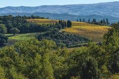 MONTALCINO - TUSCANY/ITALY: 31 DE OUTUBRO DE 2016: Campo de Montalcino, vinhedo, árvores de cipreste e campos verdes Fotografia de Stock