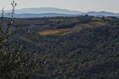 MONTALCINO - TUSCANY/ITALY : LE 31 OCTOBRE 2016 : Campagne de Montalcino, vignoble, arbres de cyprès et champs verts Photos libres de droits