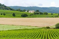 Montalcino (Tuscany, Italy) Stock Image