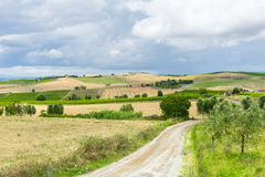Montalcino (Tuscany, Italy) Royalty Free Stock Images