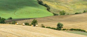 Montalcino (Tuscany, Italy) Stock Photography