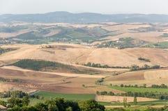Montalcino, Tuscany Włochy, 23rd Lipiec 2016,/Panoramiczny widok winogron pola w lecie na wzgórzach Montalcino obraz royalty free
