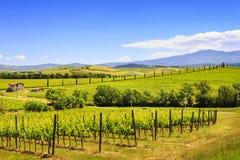 Montalcino, vineyard, cypress trees and old farm. Tuscany, Italy Stock Photos