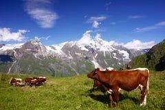 Montan@as austríacas Foto de archivo
